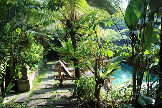 Villa Ibu : pool and garden