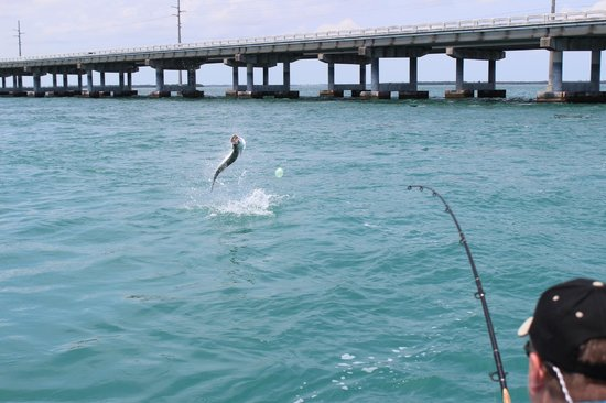 Strike zone charters big pine key fl top tips before for Bahia honda fishing