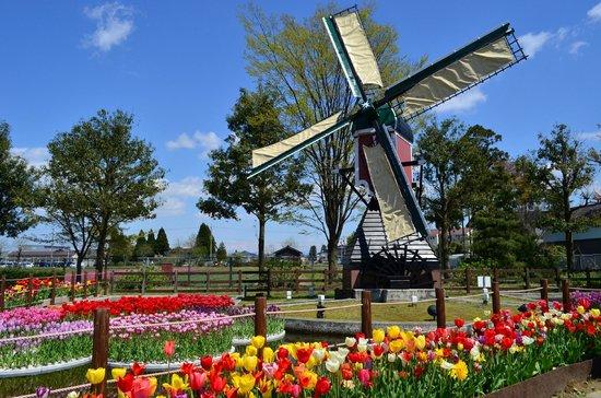 「オランダ 風車」の画像検索結果