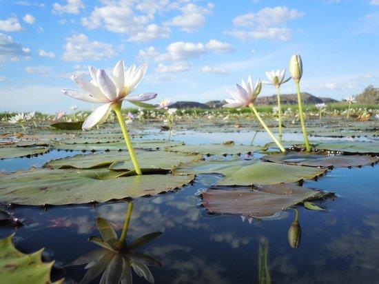 Davidson's Arnhemland Safari Lodge: On Tour