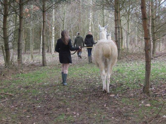 Catanger Llamas: Llama Trek