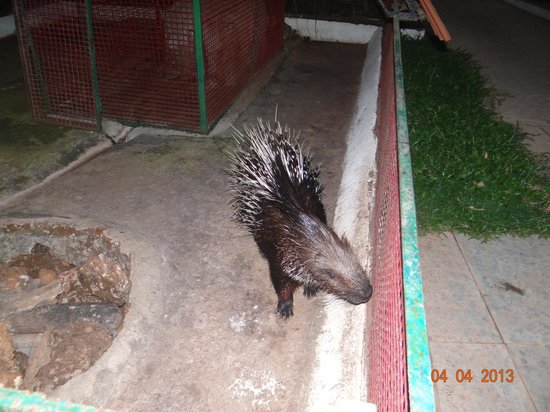Villa Bomfim: The Zoo