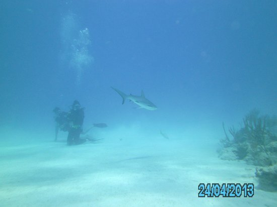 Dive Exuma: Shark Reef