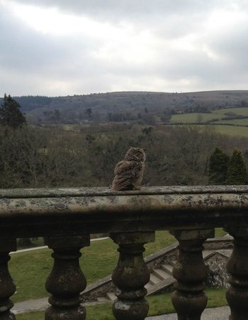 Bovey Castle Hotel: The view from the terrace - and our room