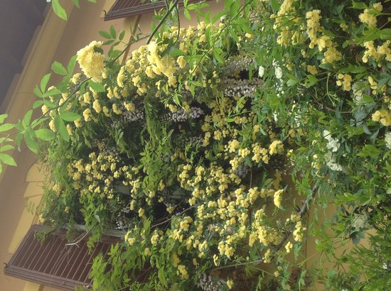 Al Giardino delle Rose : Dettaglio giardino