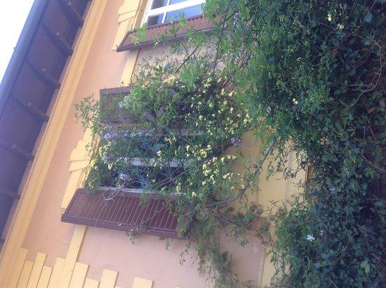 Al Giardino delle Rose: Dettaglio giardino