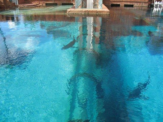 Atlantis, Royal Towers, Autograph Collection: Atlantis - Shark pool