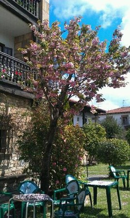 Hotel Museo Los Infantes: the beautiful garden