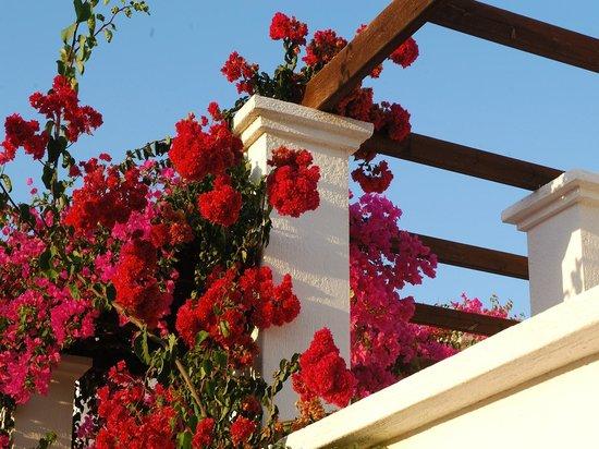 Nana Beach Hotel: Garden