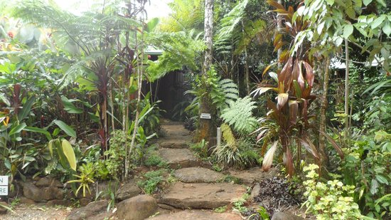 Rose Gums Wilderness Retreat : The path leading up to Reception