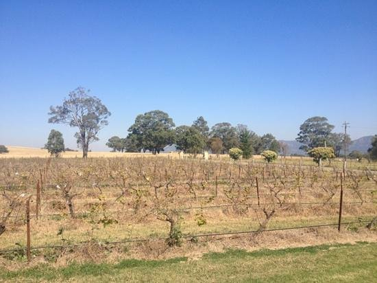 Vineyard Shuttle Service Daily Guided Winery Tours : Rothbury