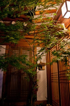 Sopoong Guest House: Beautiful Japanese Maple Tree