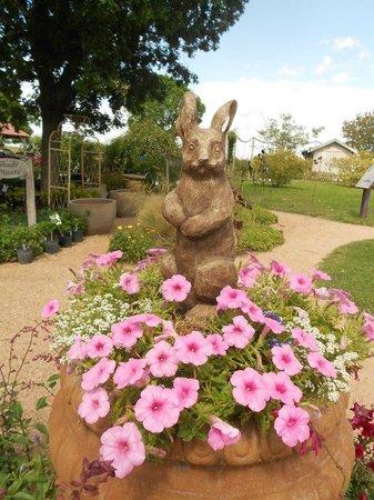 Antique Rose Emporium: Bunny statue