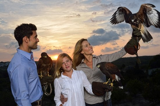 International School of Falconry Las Colinas