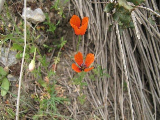 Casa Rural El Paraje: Spring - Primavera