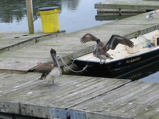 Riverside Cafe: pelicans on deck