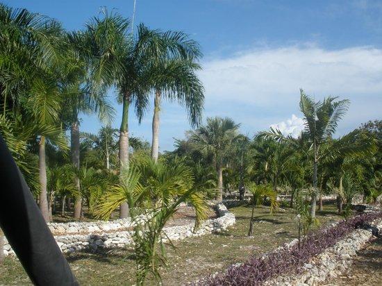 Parc écologique Indigenous Eyes : palms
