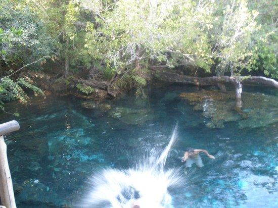 Parc écologique Indigenous Eyes : jumping off the platform