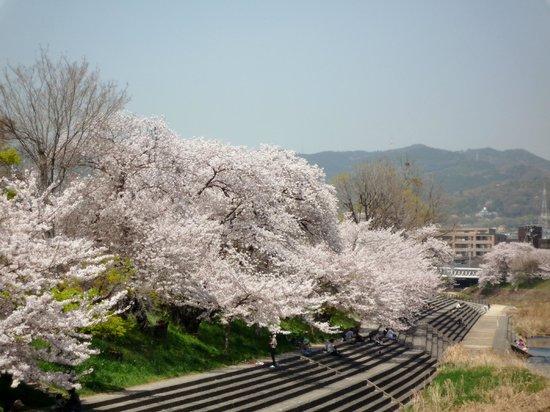 Takatsuki, Ιαπωνία: 桜の下でお花見