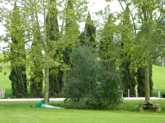 Agriturismo San Carlo: giardino