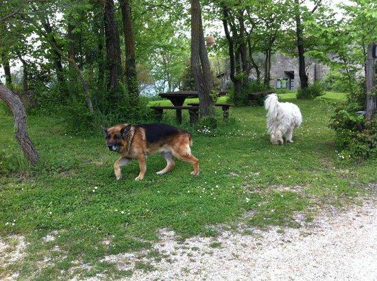 Agriturismo Le Casacce: i due cani