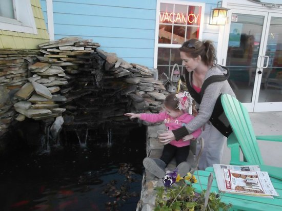 Drifters Reef Hotel: Feeding the goldfish!