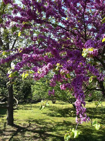 B&B Leas Home : Springtime in the garden at Lea's Home B&B