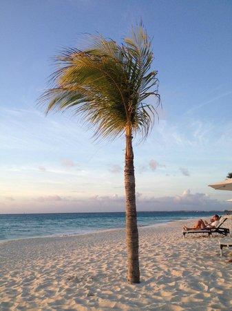 Bucuti & Tara Beach Resort Aruba: Sunset...
