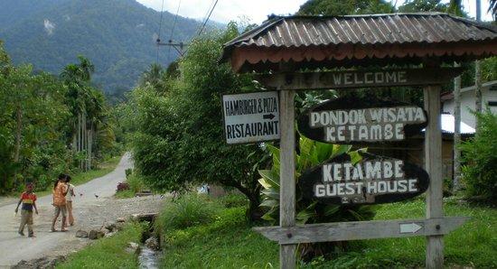 ケタンベ Picture