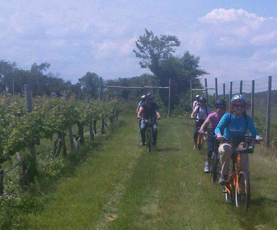 North Fork Bicycle Tours: Vinyard Ride