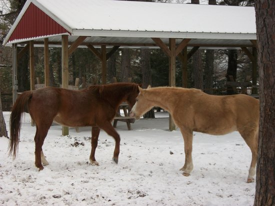 Bear Mountain Log Cabins: play in the snow with our horses