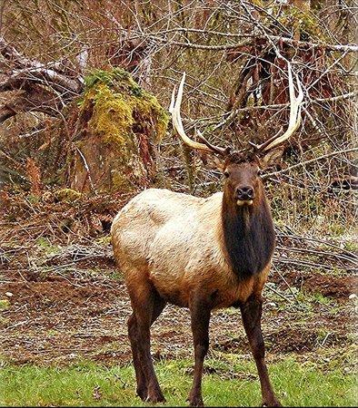 Ovenell's Heritage Inn: Elk on the ranch