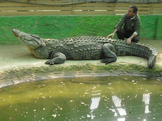 Afbeeldingsresultaat voor crocodile park torremolinos big daddy