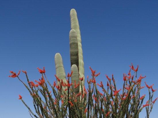 La Quinta Inn & Suites Phoenix West Peoria : AZ was in full bloom