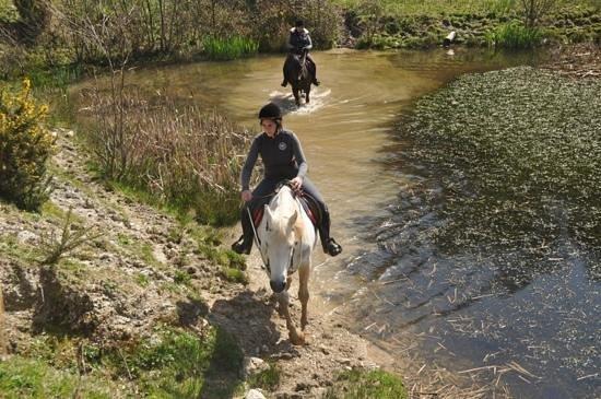 Polmartin Riding Equestrian Site: Een onderschrift toevoegen