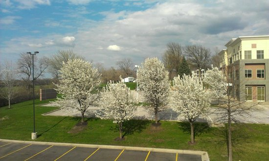 Hampton Inn Kansas City Lee's Summit: View from room. Lovely trees
