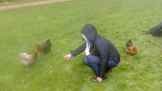 Priory Mill Farm Campsite: cheeky hens :)