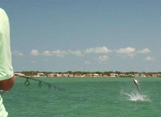 Florida keys flats fishing tavernier top tips before for Key largo fishing guides