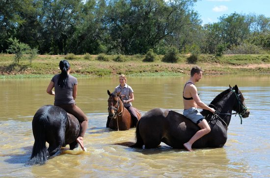 Ant's Hill & Ant's Nest: swimming with the horses