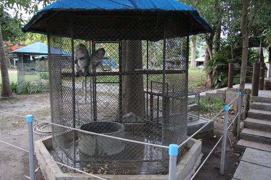 Samui Aquarium and Tiger Zoo: Poor monkeys - so sad : (