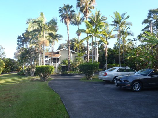 Areca Palms Estate Bed and Breakfast : View from the entrance driveway