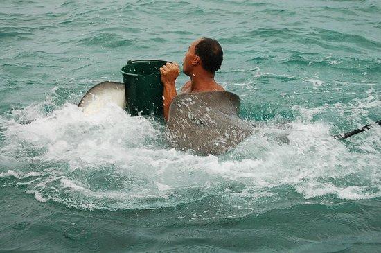 Conrad Bora Bora Nui: Hilton Shark Tour