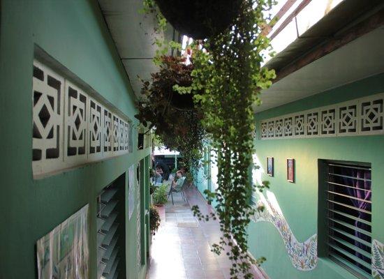 Hostal Entre Amigos: hanging garden