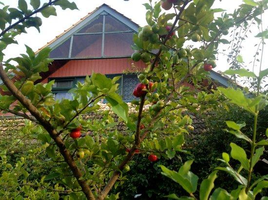 Janela de Marcia Bed and Breakfast: Acerola Tree