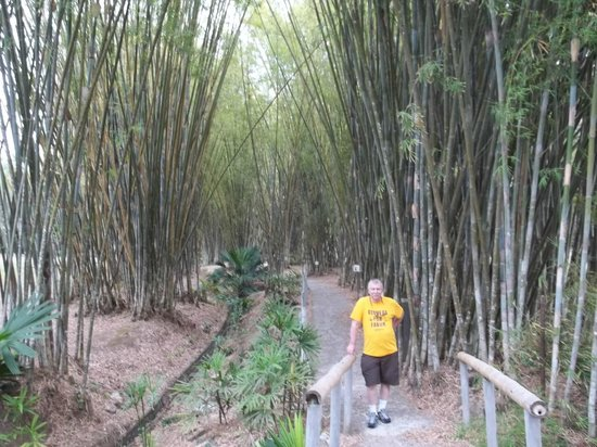 Summit Botanical Gardens: Many bamboo species on the walks