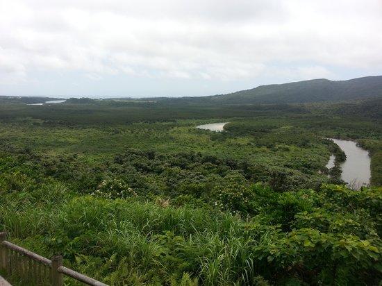 Nakama-river Protected Region : 展望台からのマングローブ林