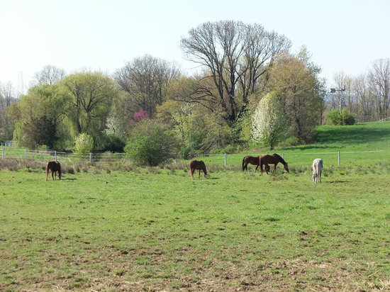 The Inn at Westwynd Farm: Horses grazing