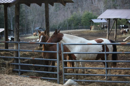 Ridin-Hy Ranch Resort: The horses were so sweet and friendly