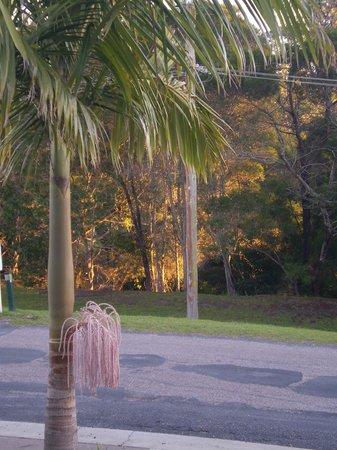 Sapphire Valley Caravan Park: Sunset between the foliage