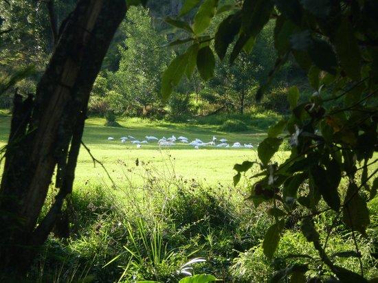 Sapphire Valley Caravan Park: Cockatoos at play